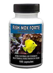 Fish-Mox-Forte-500mg-Amoxicillin-100ct