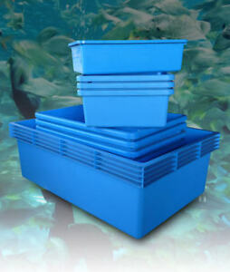 Classica blue plastic polyethylene aquarium pond fish for Carpe koi aquarium 300 litres