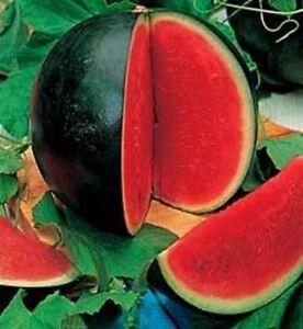 100-SUGAR-BABY-WATERMELON-Citrullus-lanatus-Fruit-Seeds