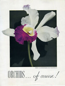 1940s-Orchid-Flower-Color-Advertising-Flier-Thomas-Young-Nurseries-New-York