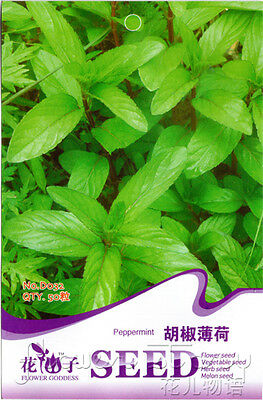 6 Kinds Mint Seeds Flower Seed Medicinal Plants Refreshing Green Sell Well