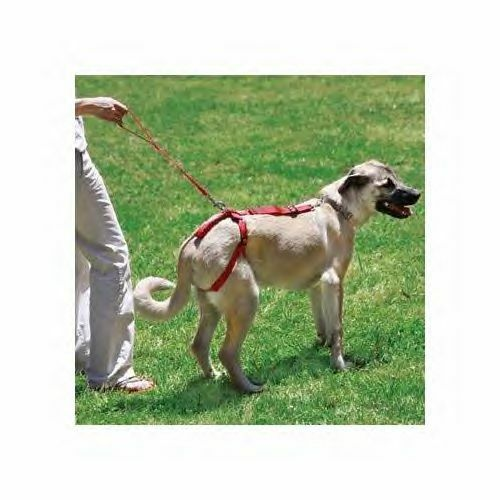Bottoms Up Harness senior dog  leash disabled pet arthritis dysplastic lift