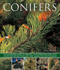 Conifers: An Illustrated Guide to Varities, Cultivation and Care, with Step-by-step Instructions and Over 160 Beautiful Photographs by Andrew Mikolajski (Paperback, 2013)
