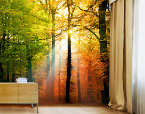 Photo-wall-mural-FOREST-LIGHTS-300x280-Wallpaper-Wall-art-Wall-decor-Trees