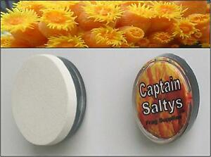 Cs20041 Captain Saltys Coral Reef Magnetic Frag Mounts large