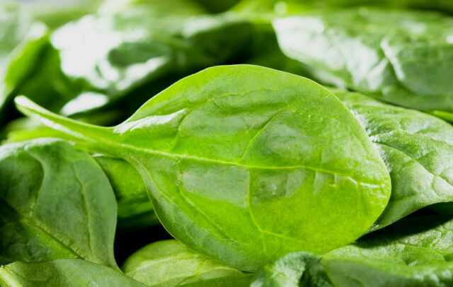 Spinach Medania Appx 1000 seeds Spring/Winter - Vegetable