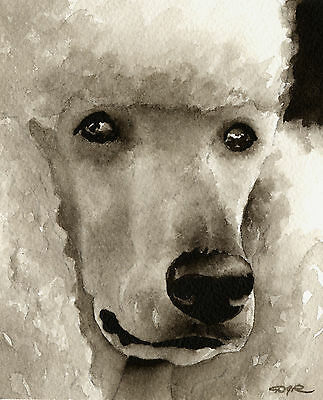 POODLE Dog Watercolor 11 x 14 ART PRINT Signed by Artist DJR