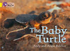 The Baby Turtle Workbook (Collins Big Cat) by HarperCollins Publishers (Paperback, 2012)