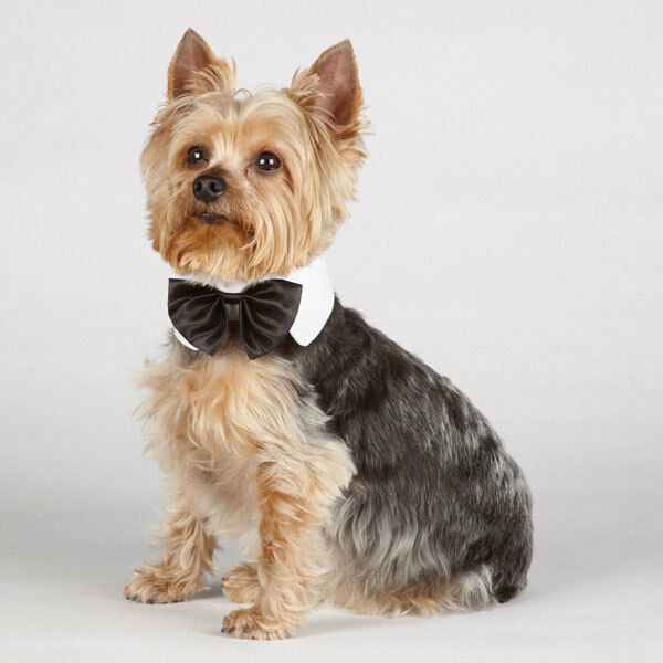 ROYALE BOW TIE Dog Collar Black Bowtie for Formal Wedding Tuxedo Holiday Clothes