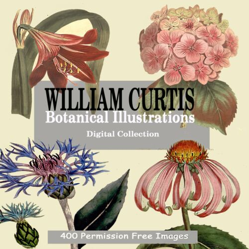 Rare Botanical Print Images prints posters crafts 382 on DVD