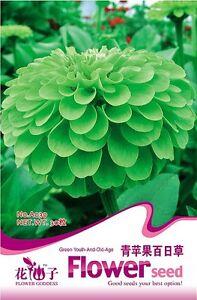 1-Pack-50-Seeds-Green-Apple-Zinnia-Flower-Seed-Hot-A039