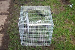 1 x LARSEN039s MATE MAGPIECROW12 LARSEN TRAP  3449 Great addition - Woodbridge, United Kingdom - BROKEN OR DAMAGED ONLY. AN MUST NOT HAVE BEEN USED Most purchases from business sellers are protected by the Consumer Contract Regulations 2013 which give you the right to cancel the purchase within 14 days after the day you r - Woodbridge, United Kingdom
