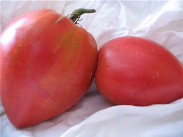 VEGETABLE TOMATO ANNA RUSSIAN 1000 FINEST SEEDS BULK