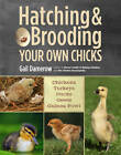 Hatching and Brooding Your Own Chicks: Chickens, Turkeys, Ducks, Geese, Guinea Fowl by Gail Damerow (Paperback, 2013)