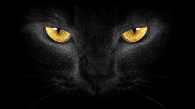 Black Cat Eyes Canvas Pictures Animal Modern Design Wall Art Prints All Sizes