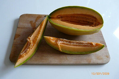 50 BANANA CANTALOUPE Cucumis Melo Melon Fruit Seeds