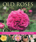 Old Roses: an Illustrated Guide to Varieties, Cultivation and Care, with Step-by-step Instructions and Over 120 Beautiful Photographs by Andrew Mikolajski (Paperback, 2013)