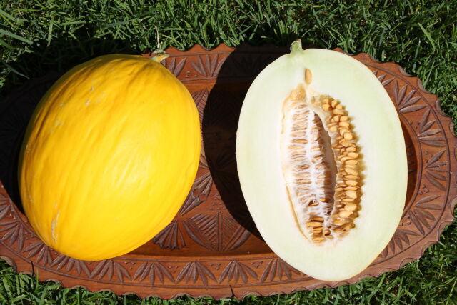 Honigmelone - 15 Samen