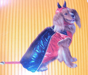 Dog-Costume-Devil-Size-Extra-Small-Brand-New