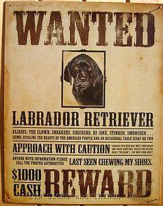 Wanted Poster Black Lab TIN SIGN labrador retriever funny ...