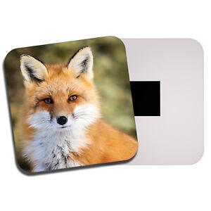 Wild Animal Nature Cute Gift #8487 Beautiful Lazy Sloth Classic Fridge Magnet