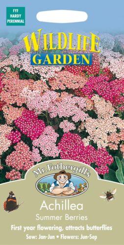 Monsieur Fothergills-paquet illustré-fleur-Achillea Baies d/'été 50 graines