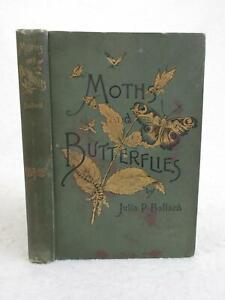 Julia-P-Ballard-AMONG-THE-MOTHS-AND-BUTTERFLIES-1891-G-P-Putnam-039-s-Sons-NY