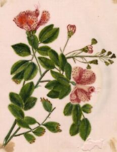 Pale-Pink-Flowers-Pith-Painting-Early-19th-century-watercolour-painting