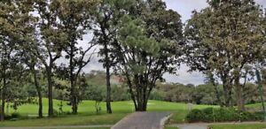 Espectaculares terrenos en el Cielo Country Club
