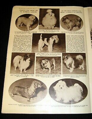 "Wheaten Terrier lifeguard on duty sign novelty 8/""x12/"" metal  pool yard dog"