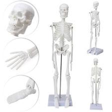45cm Life Size Full Body Medical Anatomical Human Skeleton Skull Model Stand 1pc