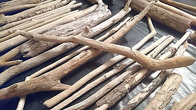 40 BIG UNIQUE PIECE OF DRIFTWOOD BEACH CRAFTS RUSTIC PROJECT ART Arts Wood