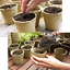 thumbnail 7 - GROWNEER 60 Packs 4 Inch Peat Pots Plant Starters For Seedling With 15 Pcs Plant