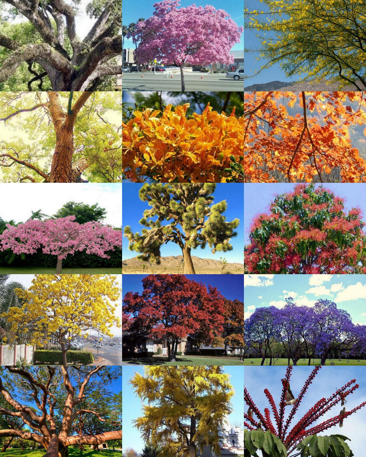 Exotic Trees Mix Rare Flower Plant Desert Fragrant Bonsai Tree Seed 100 Seeds For Sale Online Ebay