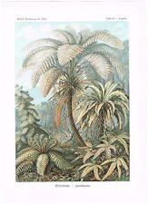 ANTIQUE PRINT NATURE ORIGINAL KUNSTFORMEN DER NATUR ERNST HAECKEL 1899 PLATE 92