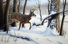 Paul Kraph Breaking Cover Deer Buck Print  12 x 8