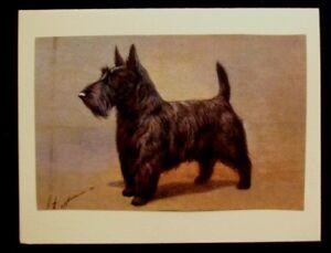 USA-Scottie-Dog-Pet-Sympathy-Card-w-envelope-5x4-Handmade