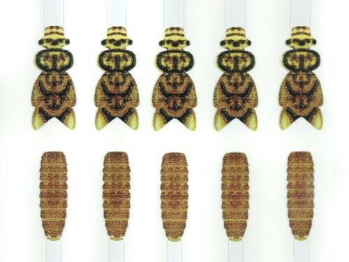 Medium Hemingway/'s Stonefly Wings Buds and Back fly tying materials