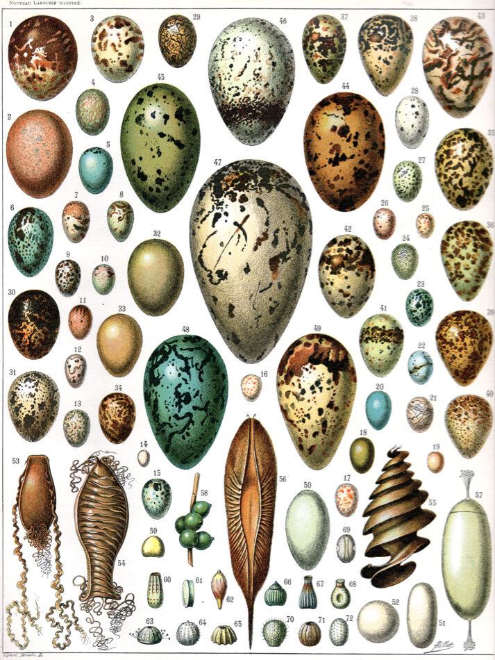 5994.Animal Eggs from Naturalistic POSTER.Interior design.School Decoration Art