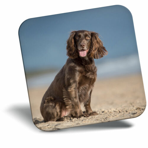 Awesome Fridge Magnet Cocker Spaniel Puppy Dog Cool Gift #12508