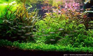 Plantes pour aquarium de 100L en 13 variétés +20 gratuites