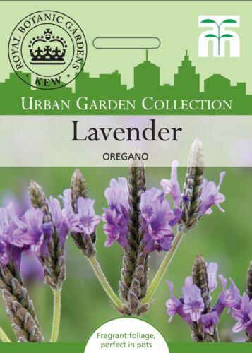 THOMPSON /& Morgan-Urban Garden Flowers-Lavande multifida Origan 80 graines
