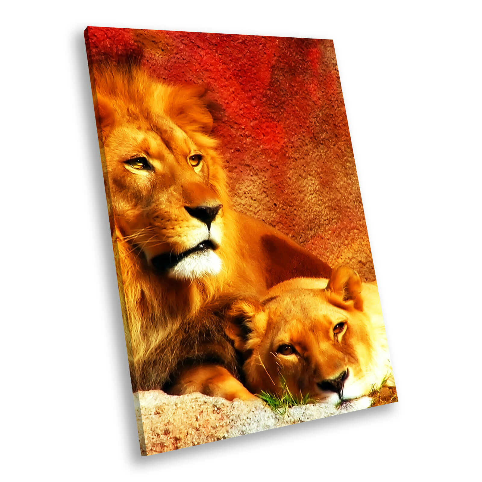 rot Gelb Lion braun Portrait Animal Canvas Wall Art Large Picture Prints