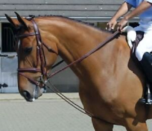 John Whitaker Fully Elasticated Training Rein Bungee Horse Pony