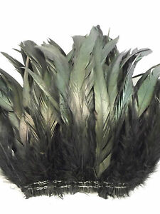 "15+ BLACK IRIDESCENT ROOSTER COQUE TAIL FEATHER 6""L-8""L"