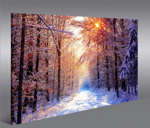 Winterzeit im Wald 1P Bild auf Leinwand Wandbild Edel Poster Kunstdruck