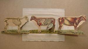 BÉlier - Très Belle Planche Couleur Dépliante à Mécanisme - Début 20e S. Mouton Gh7lbfac-07213304-494652576