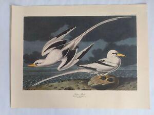 14-LARGE-beautiful-16-034-x21-034-Vintage-JJ-Audubon-Birds-Northwestern-Mutual-Prints