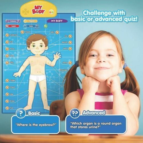 Details about  /Think Gizmos Interactive My Body Discovery Posters