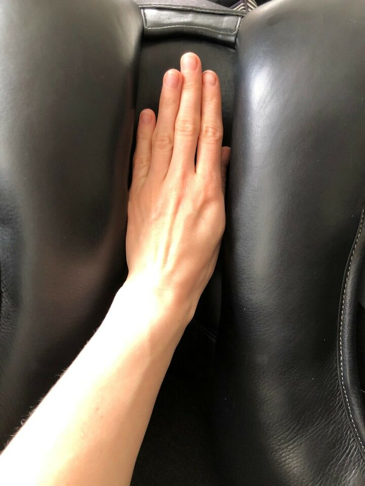 Dressursadel, 16,5 tommer , Trainers Jessica Deluxe